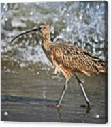 Curlew And Tides Acrylic Print
