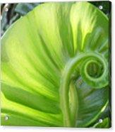 Curly Leaf Acrylic Print