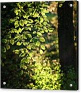 Curtain Of Leaves Acrylic Print