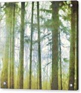 Curtain Of Morning Light Acrylic Print