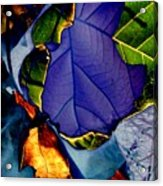 Curved Leaf Acrylic Print
