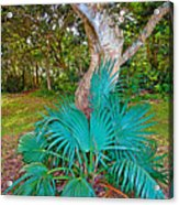 Curves And Fronds Acrylic Print