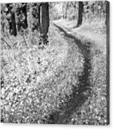 Curving Path Through Woods Acrylic Print