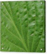 Curvy Leaf Lines Acrylic Print