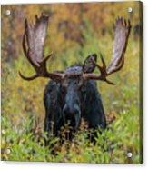 Custer In Autumn Acrylic Print