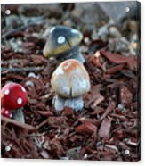 Cluster Of Toadstools  In Fairy Garden Acrylic Print