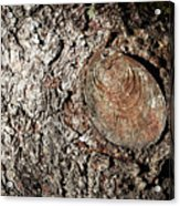Cut Branch On Tree Trunk Acrylic Print