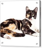 Cute Calico Kiten Sticking Tongue Out Acrylic Print