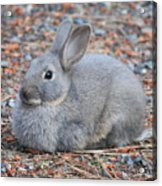 Cute Campground Rabbit Acrylic Print