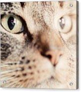 Cute Cat Close-up Portrait Acrylic Print