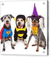 Cute Dogs Wearing Halloween Costumes Acrylic Print