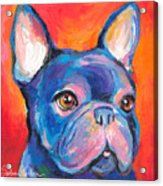 Cute French Bulldog Painting Prints Acrylic Print by Svetlana Novikova