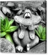Cute Garden Frog And Succulents Acrylic Print