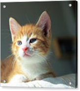 Cute Orange Kitten With Large Paws In Sunny Day Acrylic Print