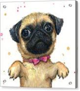 Cute Pug Puppy Acrylic Print