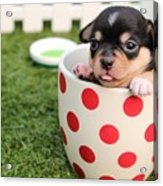Cute Puppy Acrylic Print