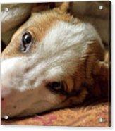 Cute Puppy Cuddles Acrylic Print