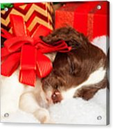 Cute Puppy With Red Bow Sleeping By Gifts Acrylic Print