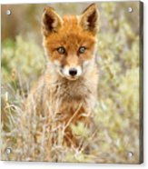 Cute Red Fox Kit Acrylic Print