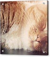 Cute Small Cat Sleeping Acrylic Print