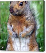 Cute Squirrel In The Park  Acrylic Print