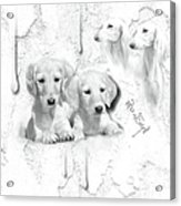 Cute White Salukis With Puppies Acrylic Print