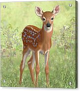 Cute Whitetail Deer Fawn Acrylic Print by Crista Forest