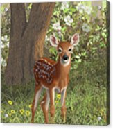 Cute Whitetail Fawn Acrylic Print by Crista Forest