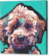 Cutey Poo Acrylic Print