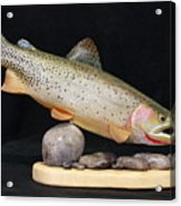 Cutthroat Trout On The Rocks Acrylic Print