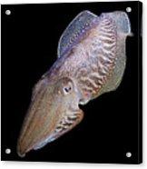 Cuttlefish At Night Acrylic Print