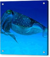 Cuttlefish Acrylic Print