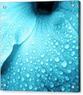 Aqua Droplets Acrylic Print