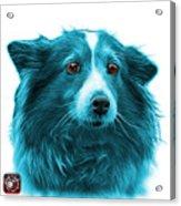 Cyan Shetland Sheepdog Dog Art 9973 - Wb Acrylic Print