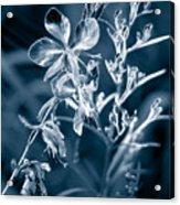 Cyanotype Morn Acrylic Print