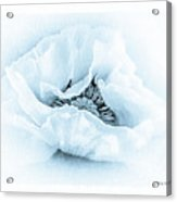 Cyanotype Poppy Acrylic Print