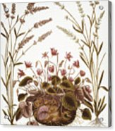 Cyclamen & Lavender, 1613 Acrylic Print