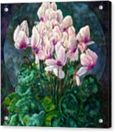 Cyclamen In Orbit Acrylic Print