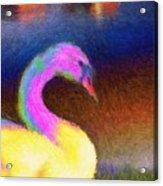 Cygnus Acrylic Print