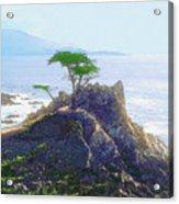 Cypress At Carmel Acrylic Print