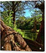 Cypress Bend Park In New Braunfels Acrylic Print