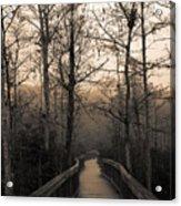 Cypress Boardwalk Acrylic Print