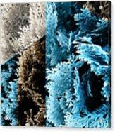 Cypress Branches No.3 Acrylic Print