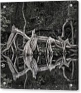 Cypress Design Acrylic Print