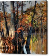 Cypress Group  Acrylic Print