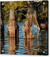 Cypress Grove One Acrylic Print