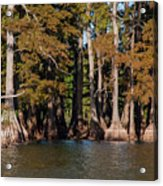 Cypress Grove Five Acrylic Print