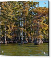 Cypress Grove Four Acrylic Print