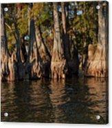 Cypress Grove Two Acrylic Print
