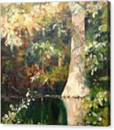 Cypress In Sun Acrylic Print